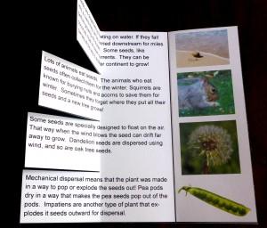 11 seed dispersal