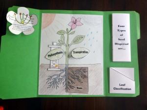 15 leaf classification pocket placement