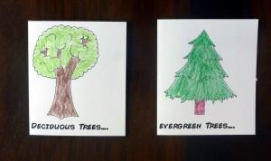 16 tree types