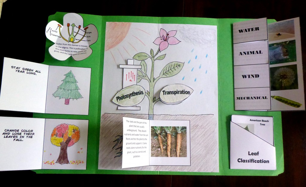 19 compelted lapbook
