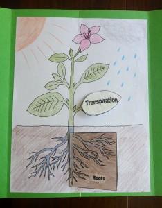 5 transpiration