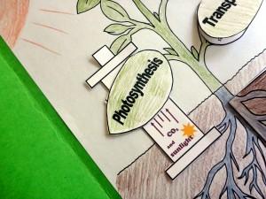 8 photosynthesis slider glued